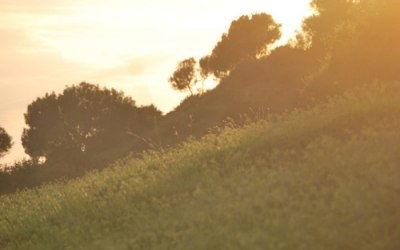 Hierba y árboles al atardecer en Vejer