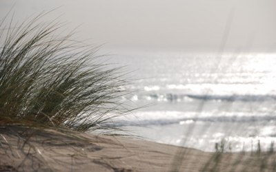 Vegetación dunas en Bolonia
