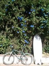 el palmar sustainable surf